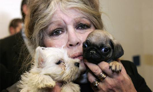 Actress Brigitte Bardot Appeals To Obama To End Brutal Seal Slaying | Ecorazzi (1502005)