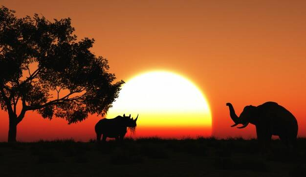 https://jp.freepik.com/free-photo/sunset-in-the-savannah_1020593.htm#page=1&query=africa&position=0 (2218348)